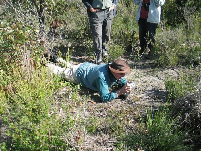 Photographing the Flying Duck (Botanist Prostrata)