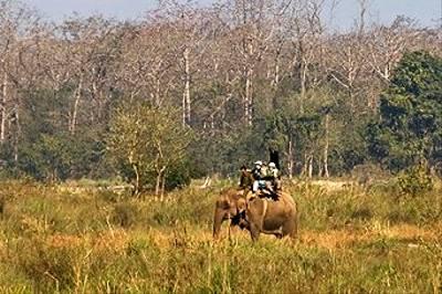 Elephant Back Safari, Chitwan