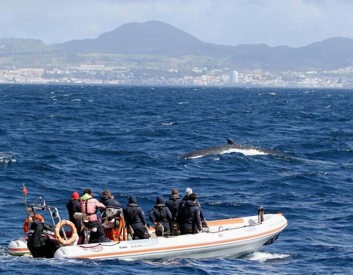 Fin Whale and Boat (Tom Brereton)
