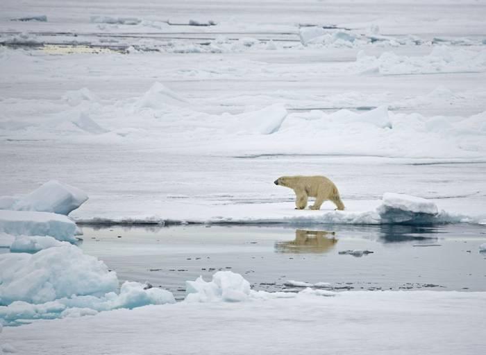 Polar Bear (Robin Couchman)