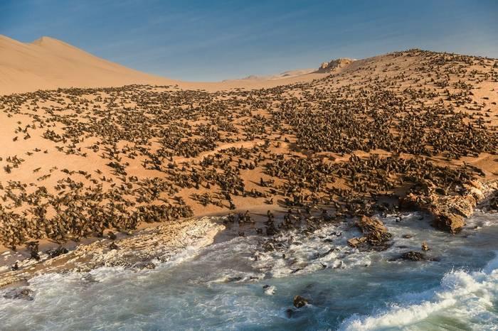 Cape Fur Seals, Skeleton Coast, Namibia Shutterstock 675556648