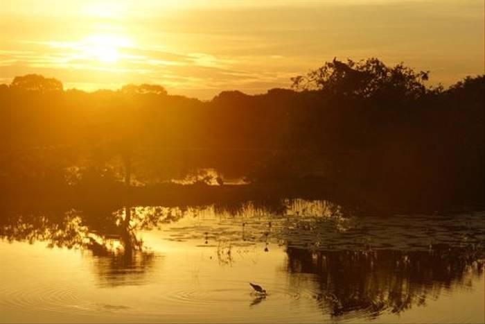 Yala sunset (Lance Tuckett)