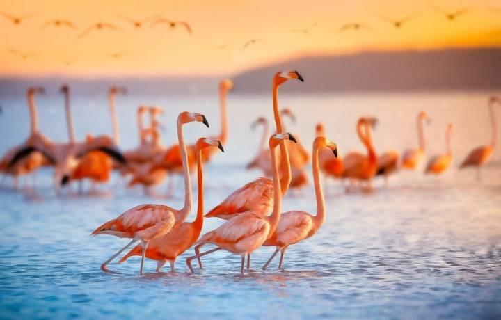 Pink flamingos in Celestun Mexico