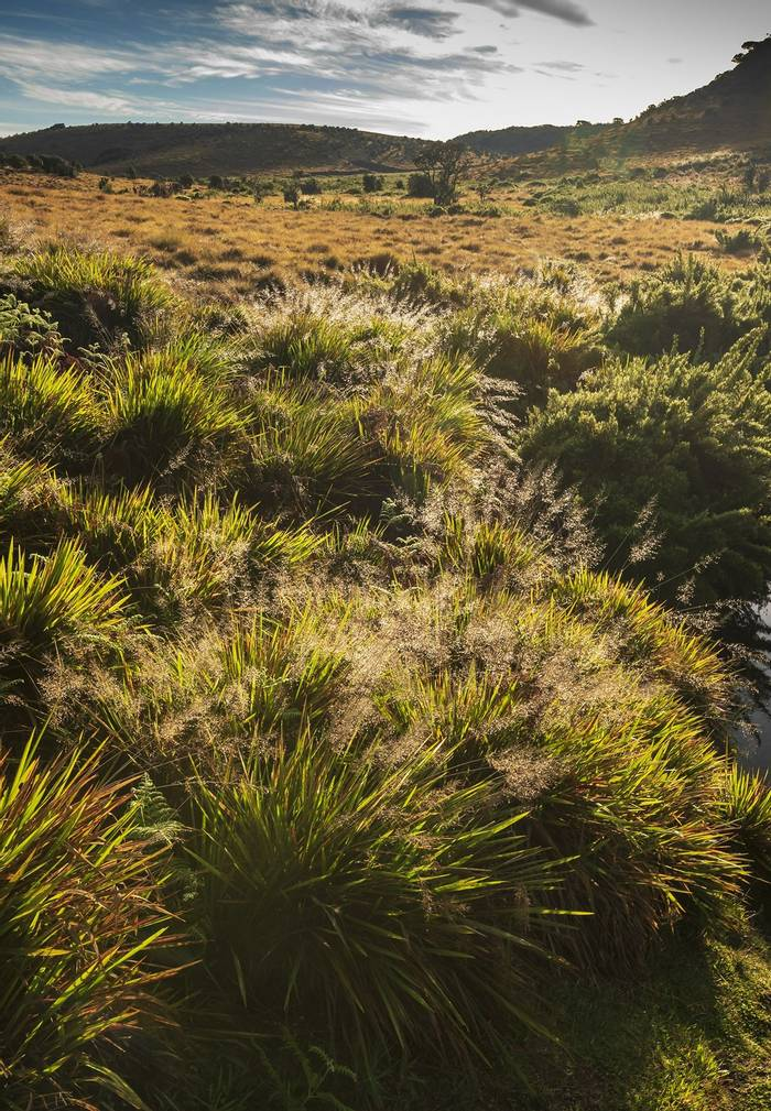 Horton Plains (John Archer Thomson)