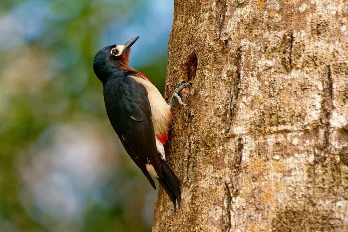 Puerto-Rican-Woodpecker-shutterstock_95748838.jpg