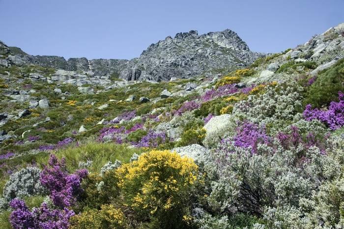 Estrela Portugal. Shutterstock..jpg