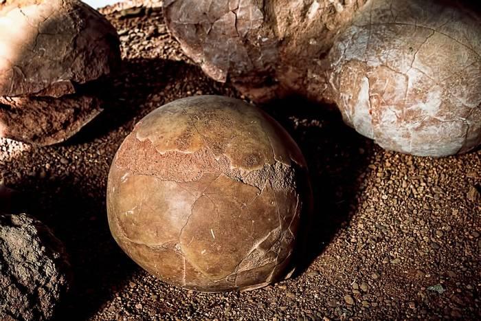 Fossilised Dinosaur eggs, Flaming Cliffs, Mongolia shutterstock_1066025513.jpg