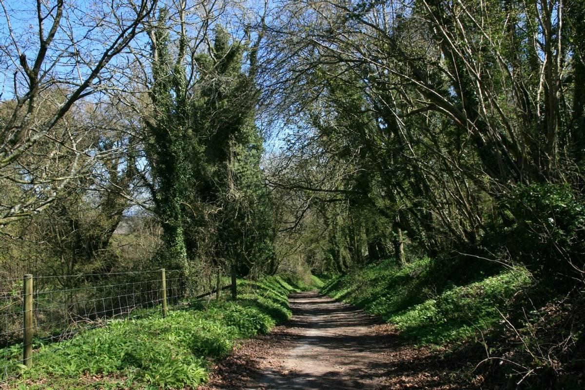 Woodland Path near Washington Village from Barnsfarm Hill.JPG