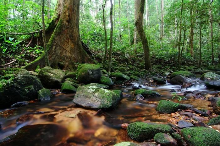 Malayan Forest Stream