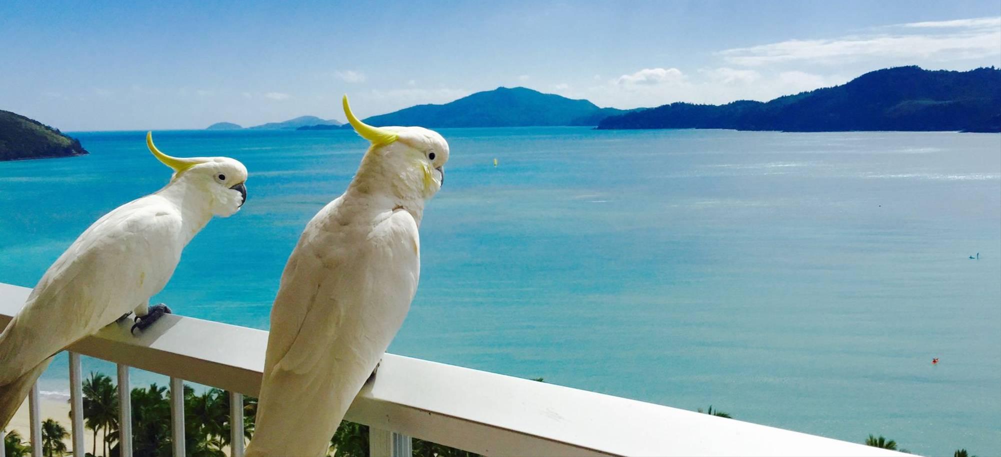 Hamilton Island   Cockatoos   Itinerary Desktop