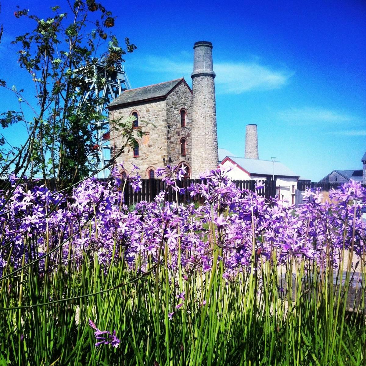 Cornwall - Hidden Gardens of Cornwall - Heartlands - gardens 3.JPG