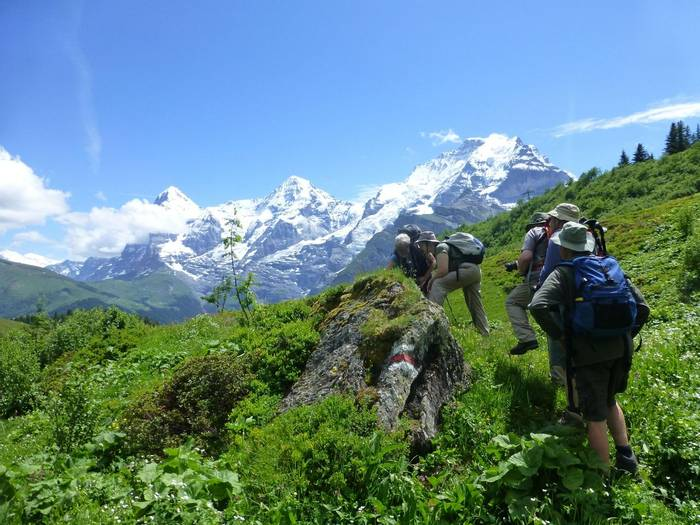 Botanising around Murren (Kerrie Porteous)