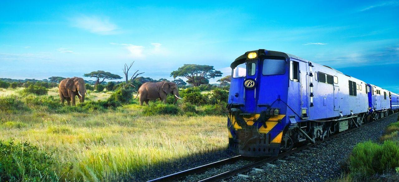 African Safari: Luxury Blue Train and Cunard Voyage
