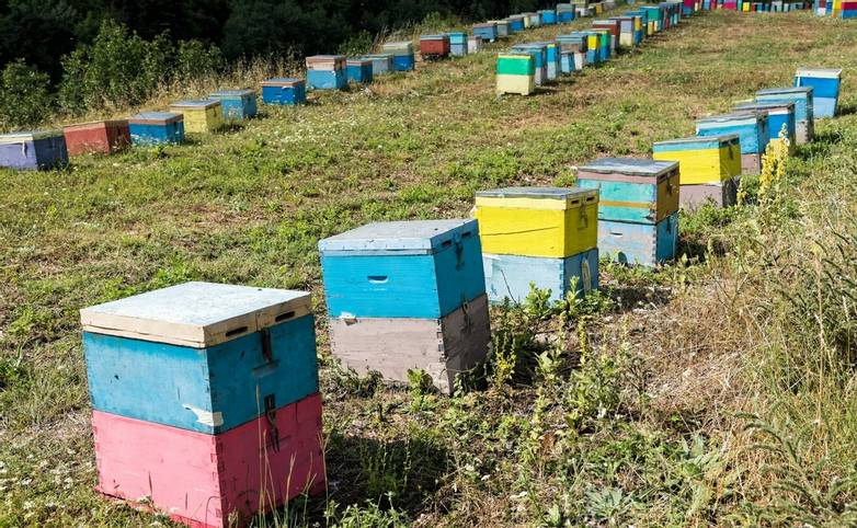 Colorful beehives in a field with trees near Mount Olympus in Greece