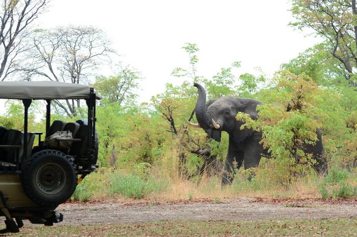 Moremi Camp Elephant visit (Rob Thatcher)
