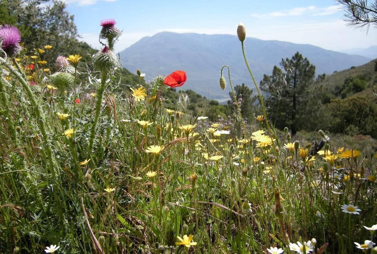 Sierra Nevada (Peter Kirby)
