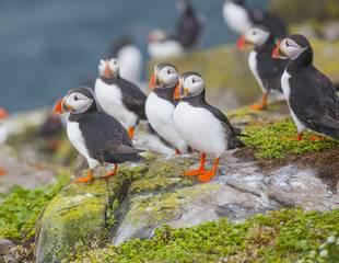 Northumberland & the Farne Islands
