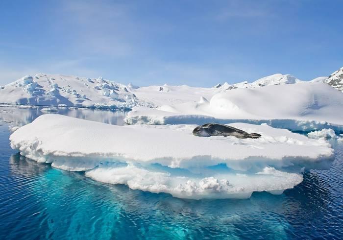 Leopard Seal, Antarctica Shutterstock 390386185