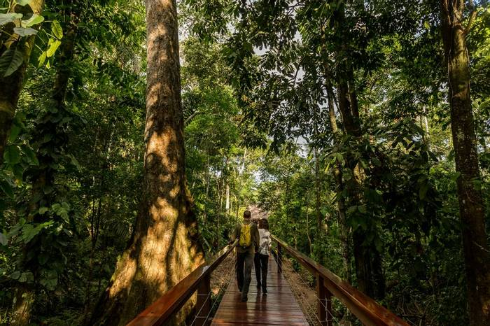 Tambopata Research Centre   Boardwalk