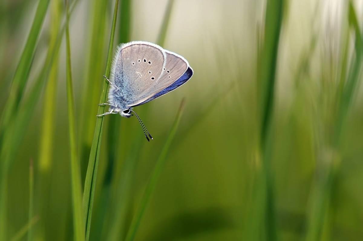 Mazarine Blue Shutterstock 386230591