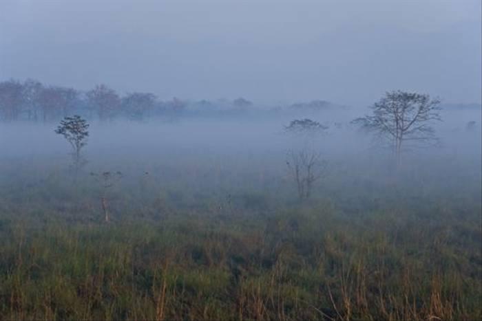 Morning mist in Chitwan (Paul Stanbury)