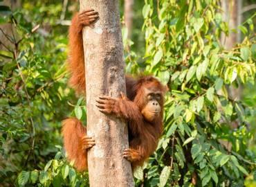 Tailormade Borneo