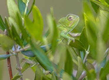The Reptiles & Amphibians of the Peloponnese