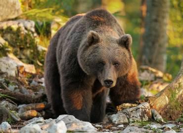 Slovenia - Bears, Birds & Caves