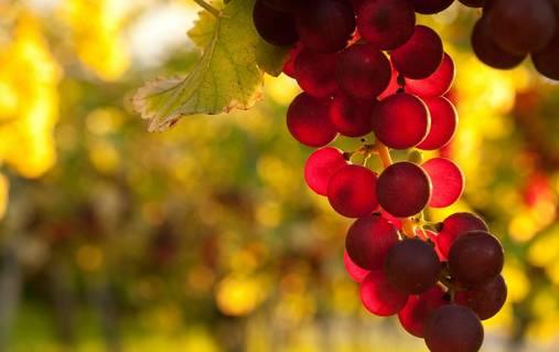 3-Night South Downs Vineyard & Wine Tasting Walks Holiday