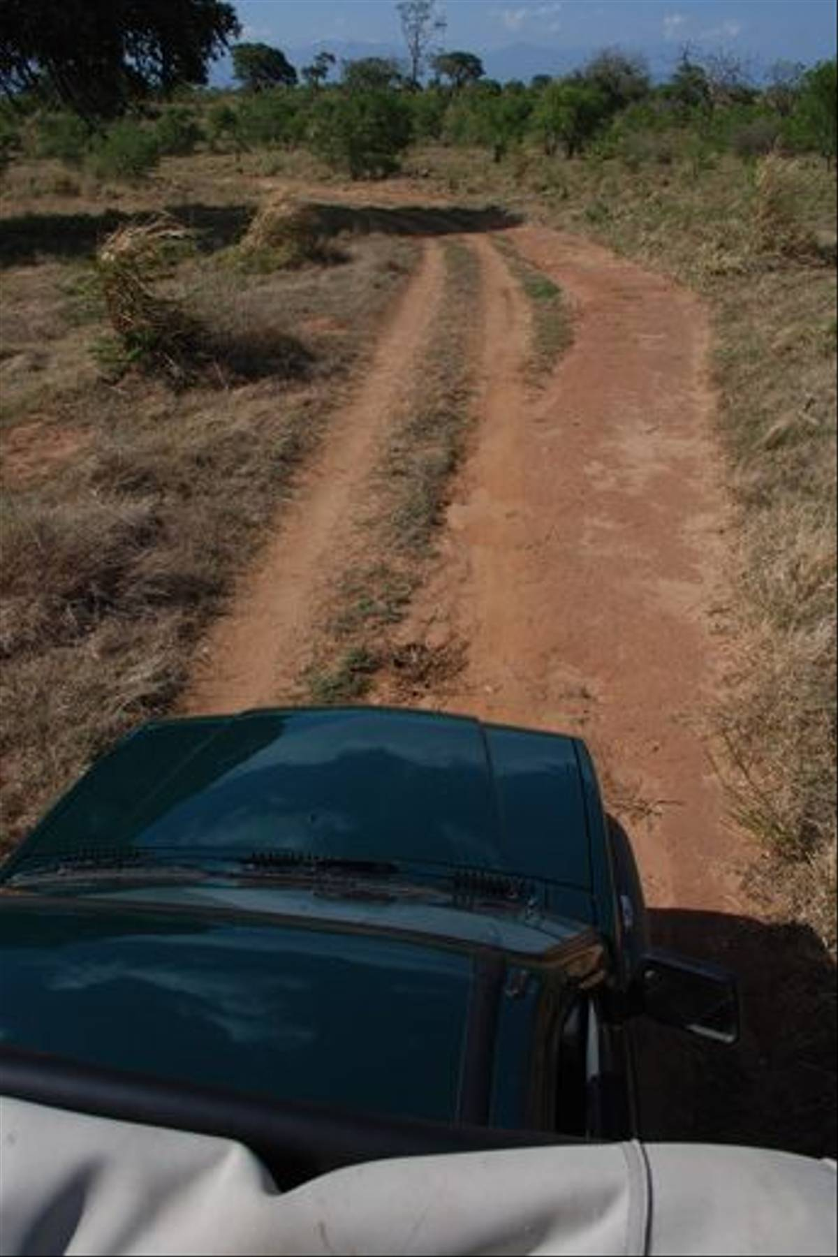 Jeep safari in Uda Walawe (Thomas Mills)