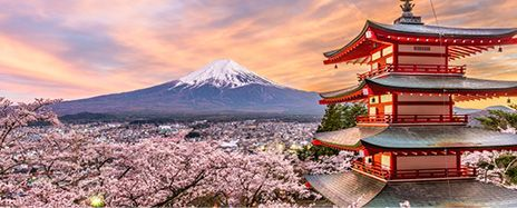 Japan's Cherry Blossom & Majestic Mount Fuji