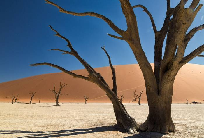 Deadvlei (Simon Shore)