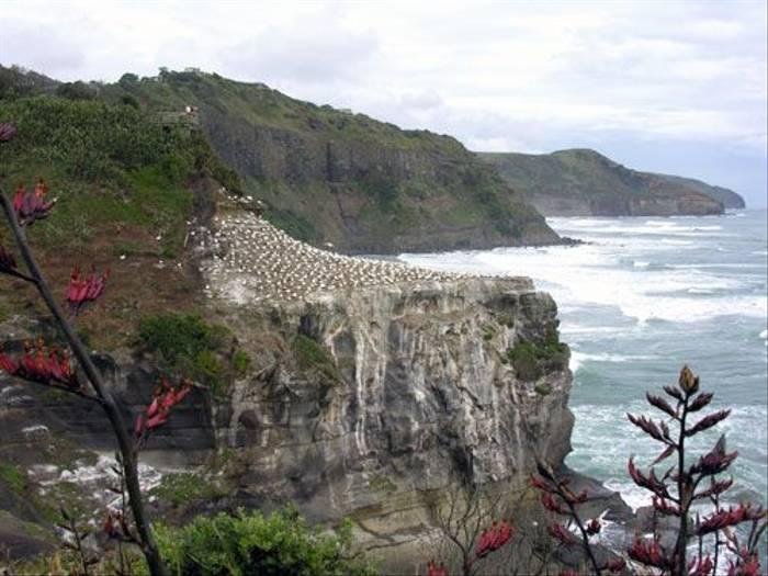 Muriwai Beach (Steve Wakeham)