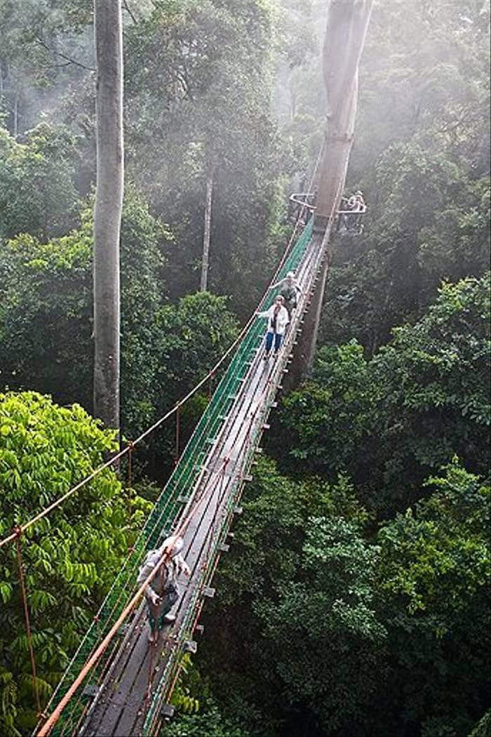 Canopy bridge (Dani Free)