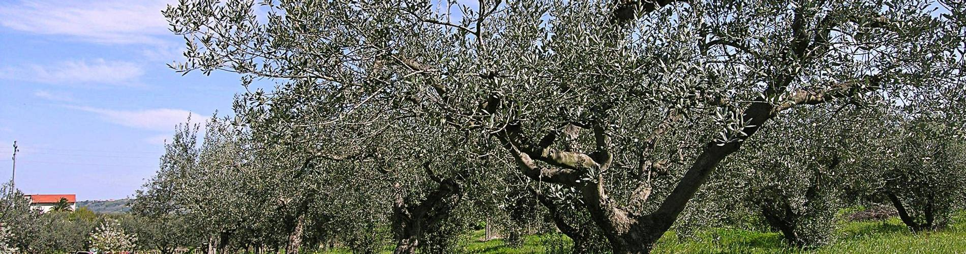 Fattoria Dell'Uliveto, Abruzzo, Italy (4).jpg