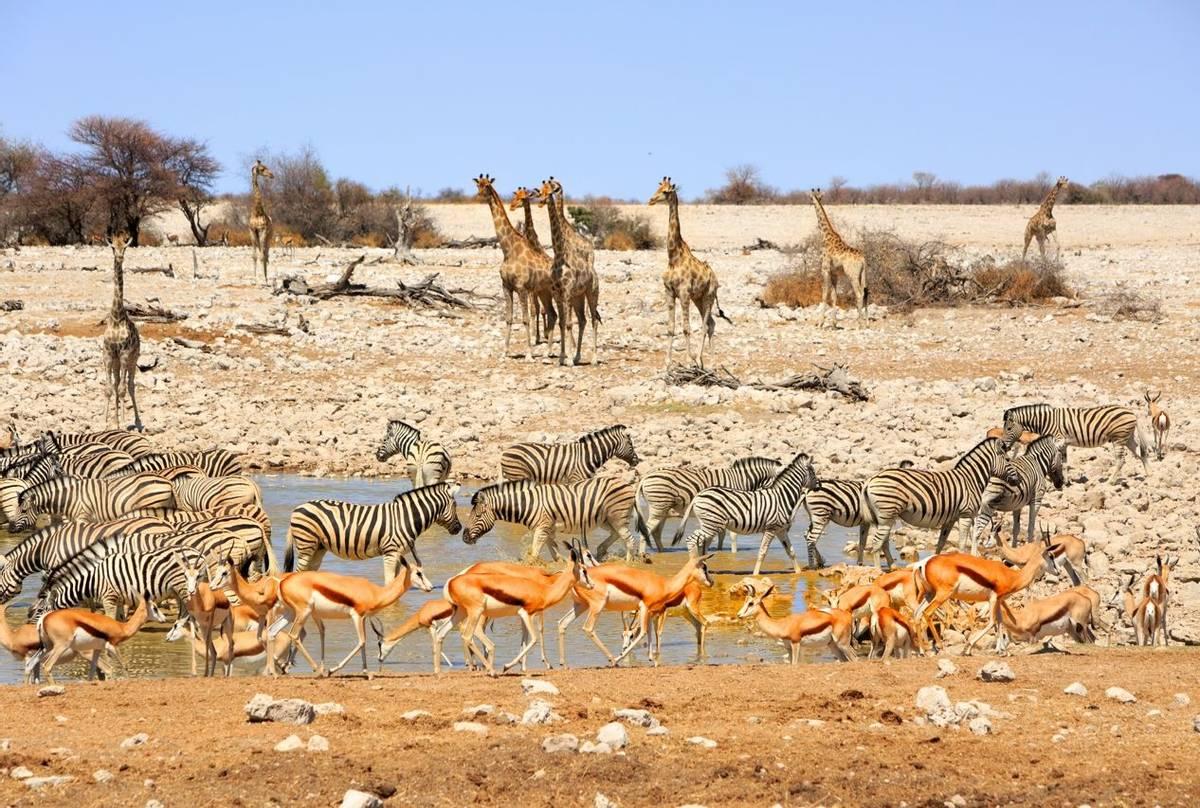 Etosha Pan Namibia Shutterstock 252393763