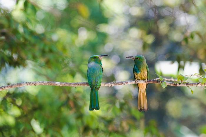 Blue Bearded Bee Eater Shutterstock 665862595