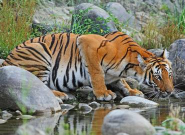 Nepal - Tigers of Chitwan & Bardia National Parks