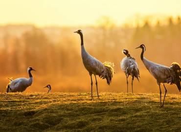 The Birds of Brandenburg & Berlin