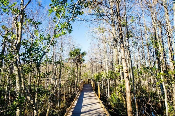 Everglades National Park, Florida, USA Shutterstock 792453130