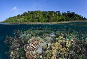 Marovo Lagoon, Solomon Islands