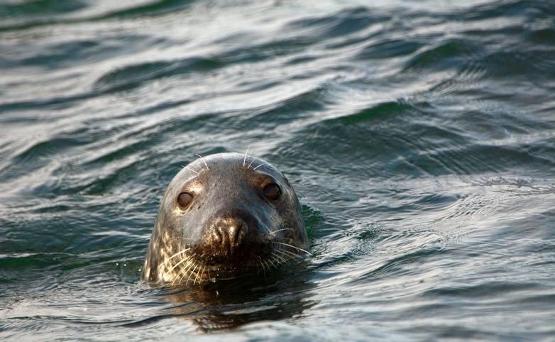 Orkney & Shetland - Shetland - AdobeStock_86196751.jpeg