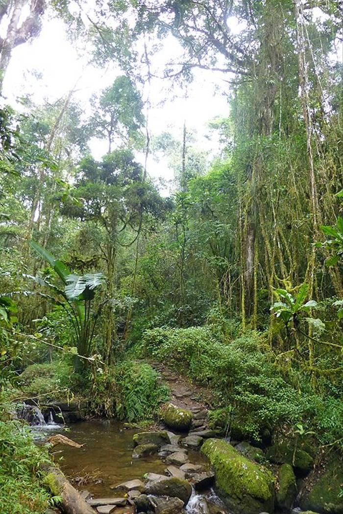 Ranomafana National Park (Kerrie Porteous)