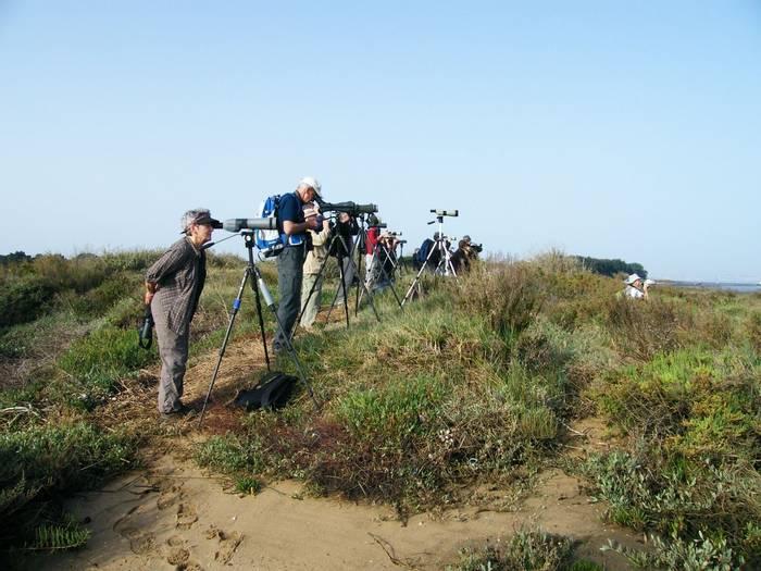 Birding at the Tagus Estuary.JPG