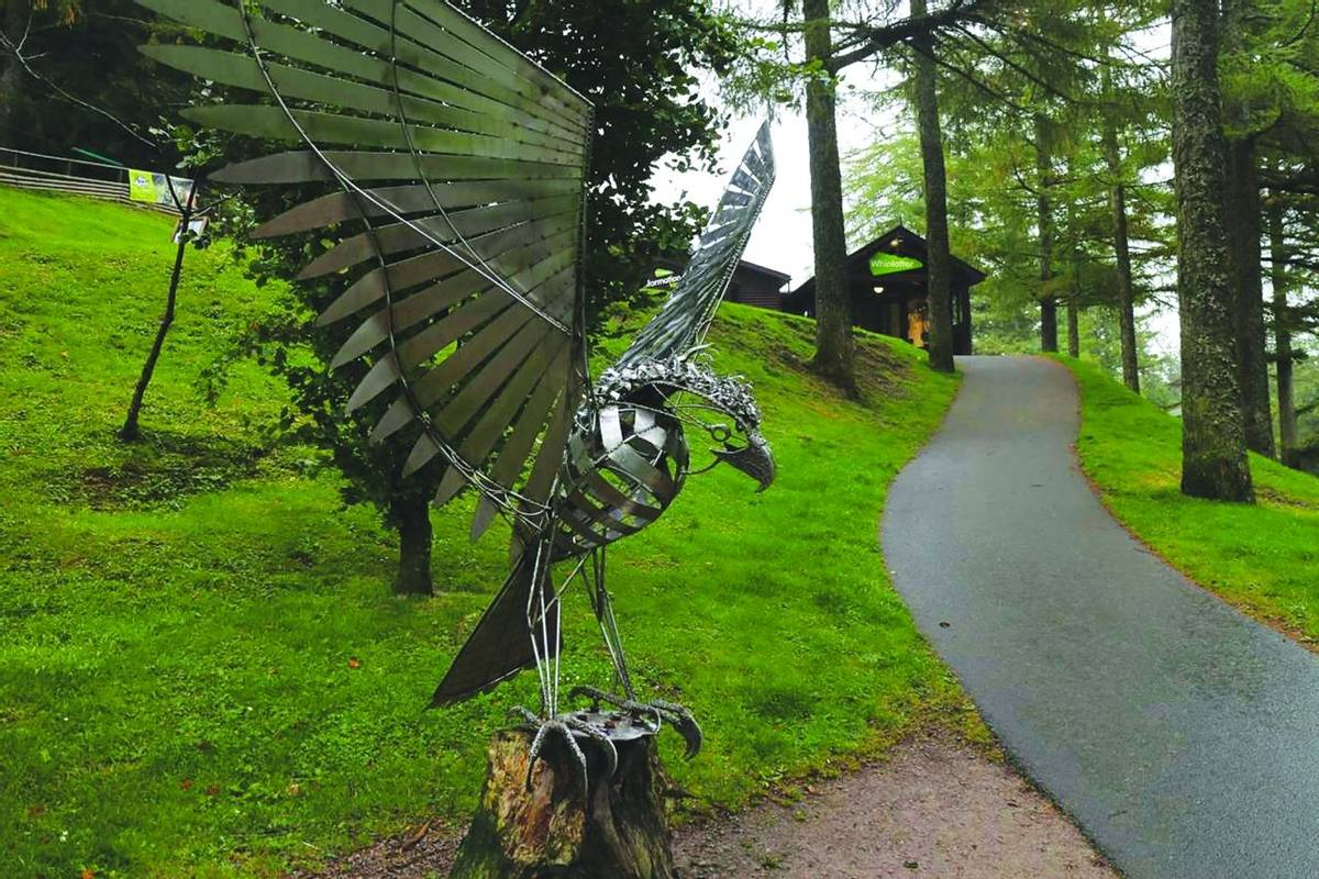 Derwent Bank - Whinlatter Forest.jpg
