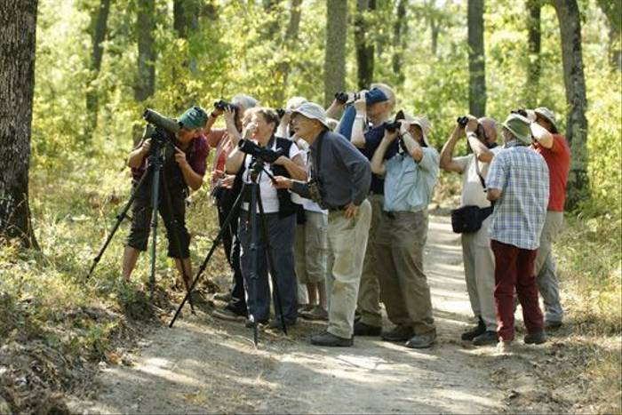 Naturetrek group watching Grey-headed Woodpecker in Goritza Woodland (Assen Ignatov)