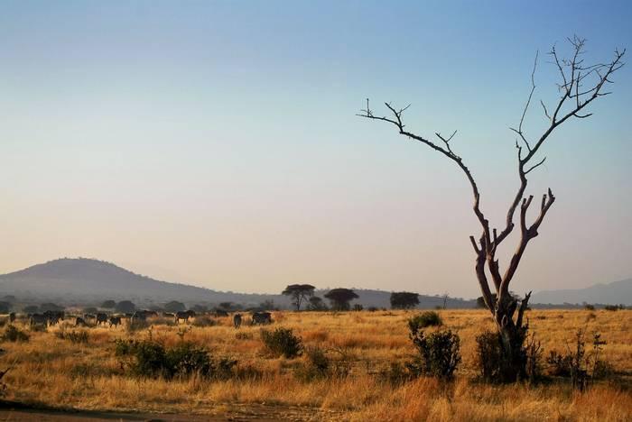 Ruaha National Park Shutterstock 421261984 2