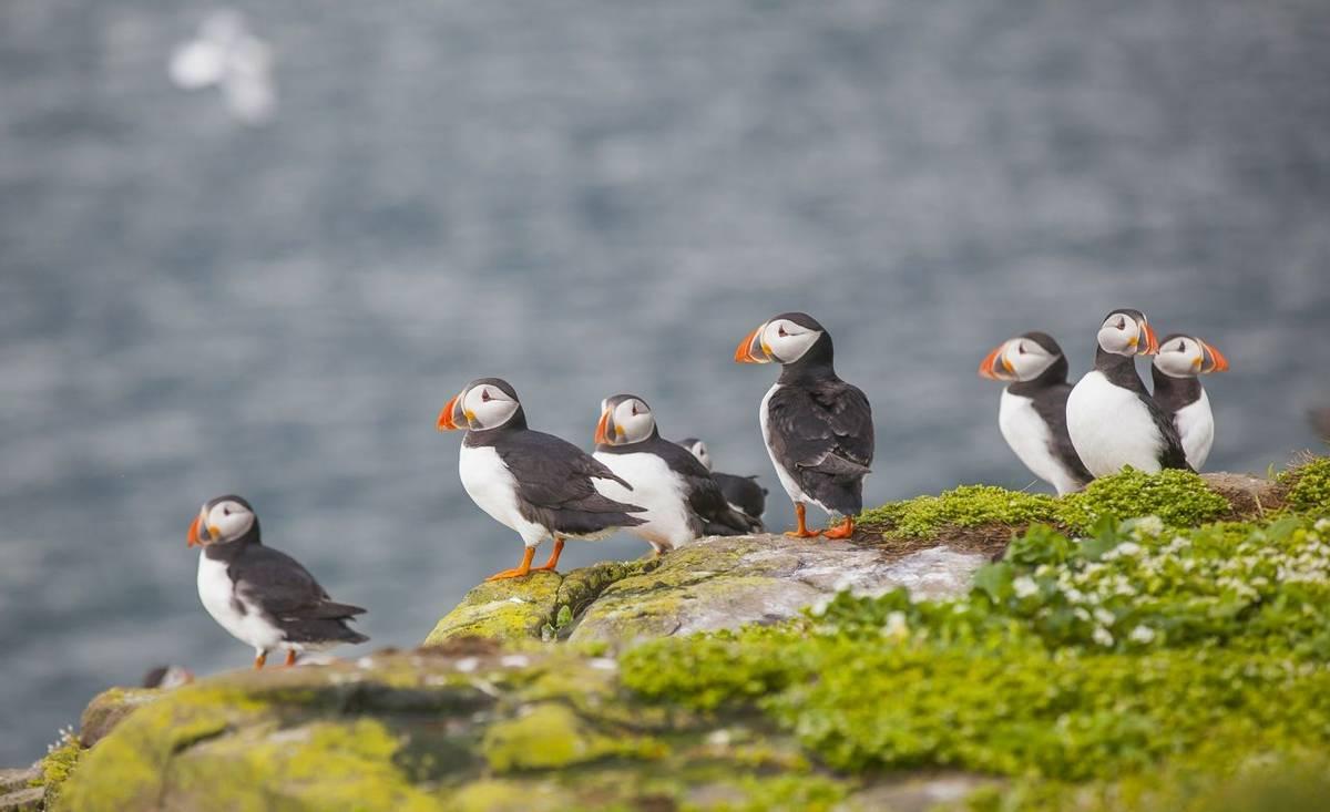 Puffin Farne Islands Shutterstock 321028829