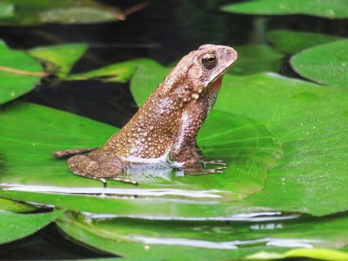 Frog Posing (David Hartill)