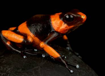 The Reptiles & Amphibians of Colombia